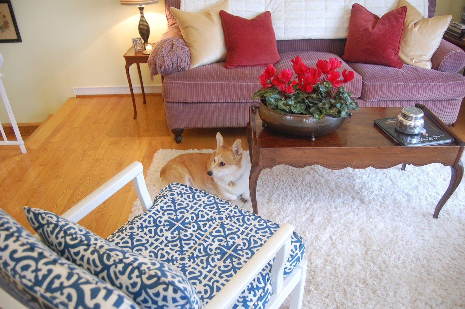 Corgi in Living Room with Holiday Decorations